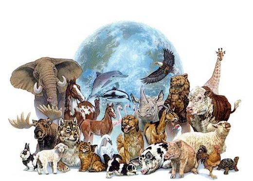 6 vidéos sur la condition animale et la protection desanimaux