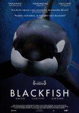 Blackfish l'orque tueuse documentaire sur la protection animale